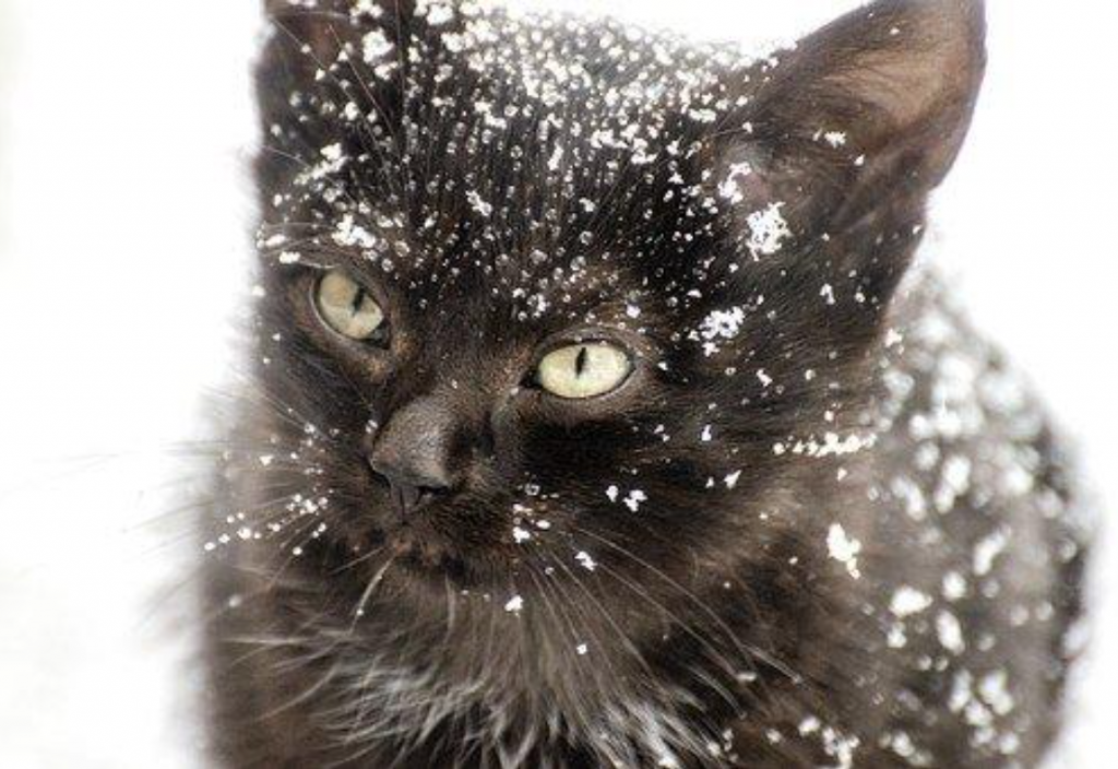 Kitten in the snow; image by elljay, via Pixabay.com.