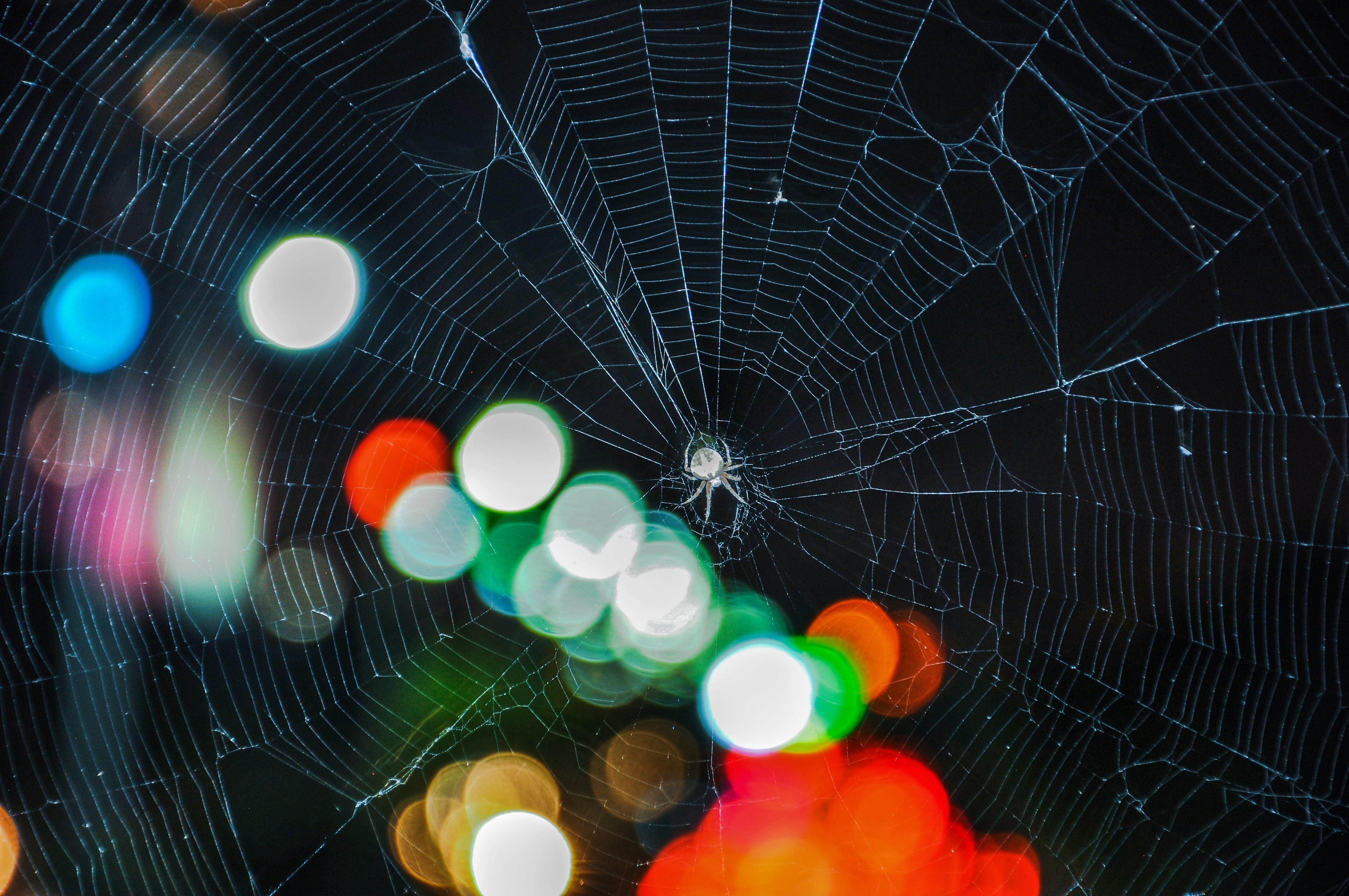 Dark Web Drug Dealer Pleads Guilty to Opioid Distribution