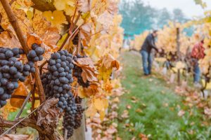 Protect the Peninsula Ask to Join Michigan Winery Case