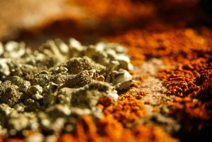 Judge Recognizes State Tort Claims Act in Mold Case