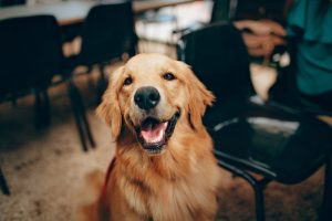 New Federal Pet Insurance Guidelines to be Proposed this Month