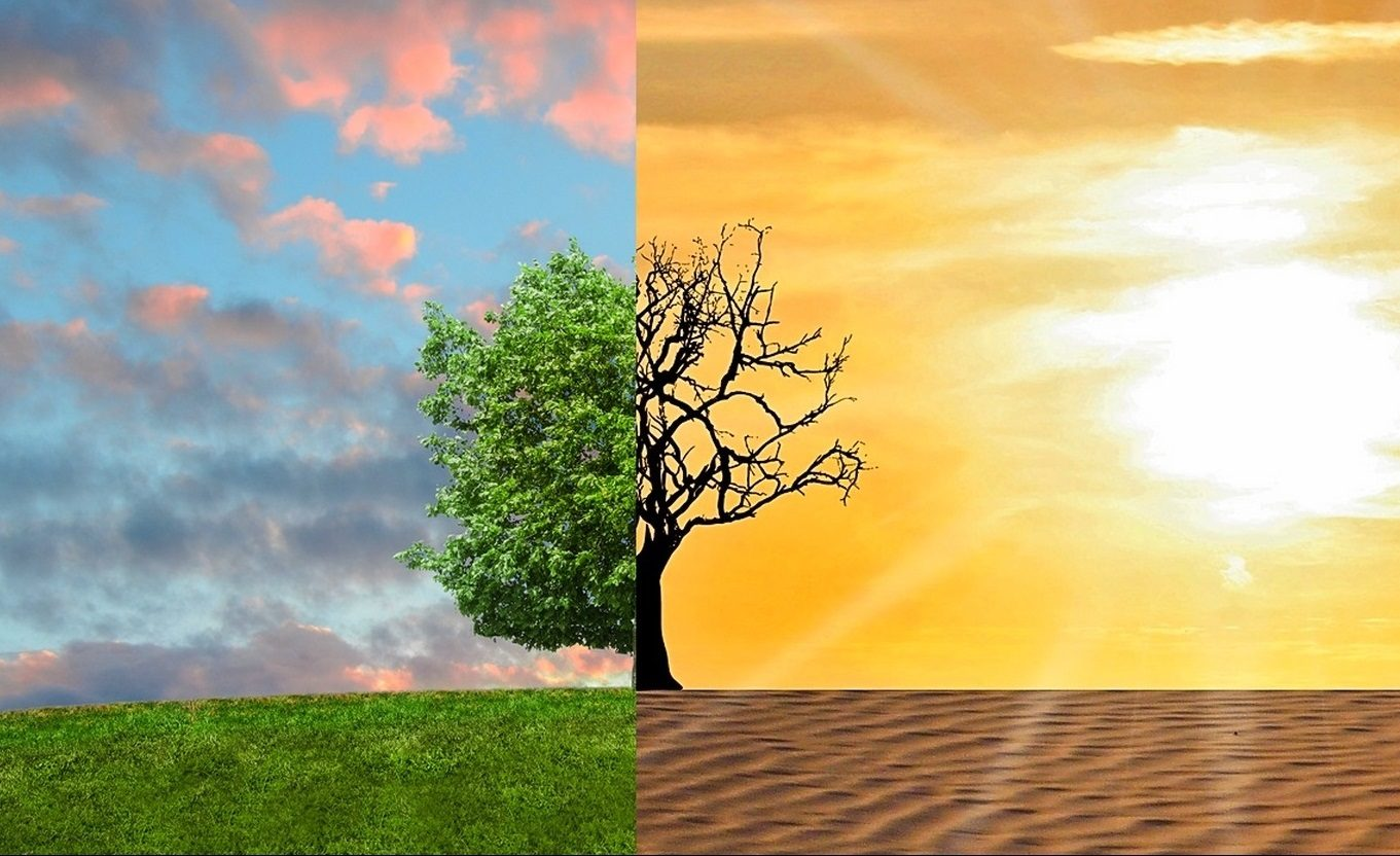 A two-part image showing half of a tree in full leaf under a blue sky, and the other half of the tree dead under the desert heat.