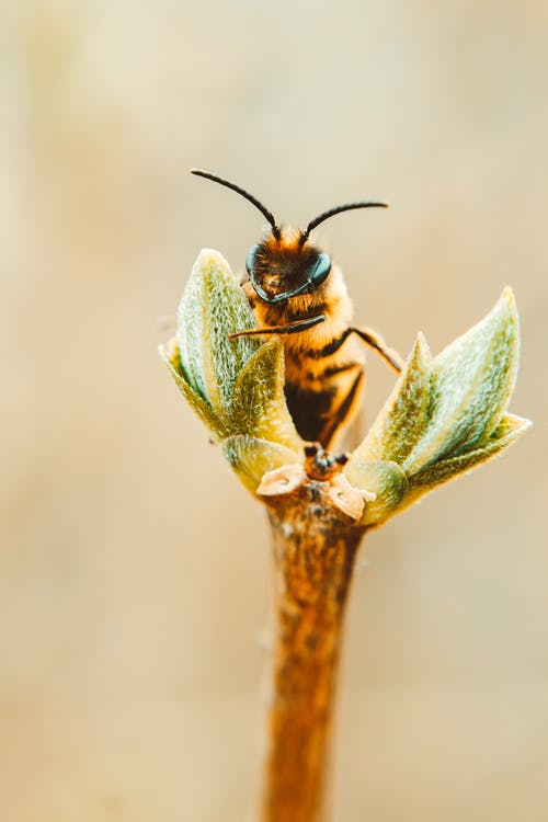 Bees Can be Trained to Detect Coronavirus Infections