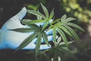 CBD Causes Puberty in 2-year-old with Seizure Disorder
