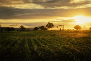 Study Finds Pesticides are Harming Organisms in the Soil