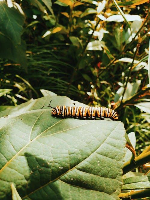 Caterpillar Venom Could Be Used for Pesticides, Meds