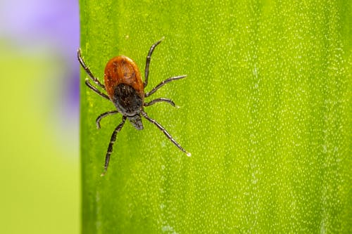 Lyme Disease Can Take a Significant Toll on Mental Health