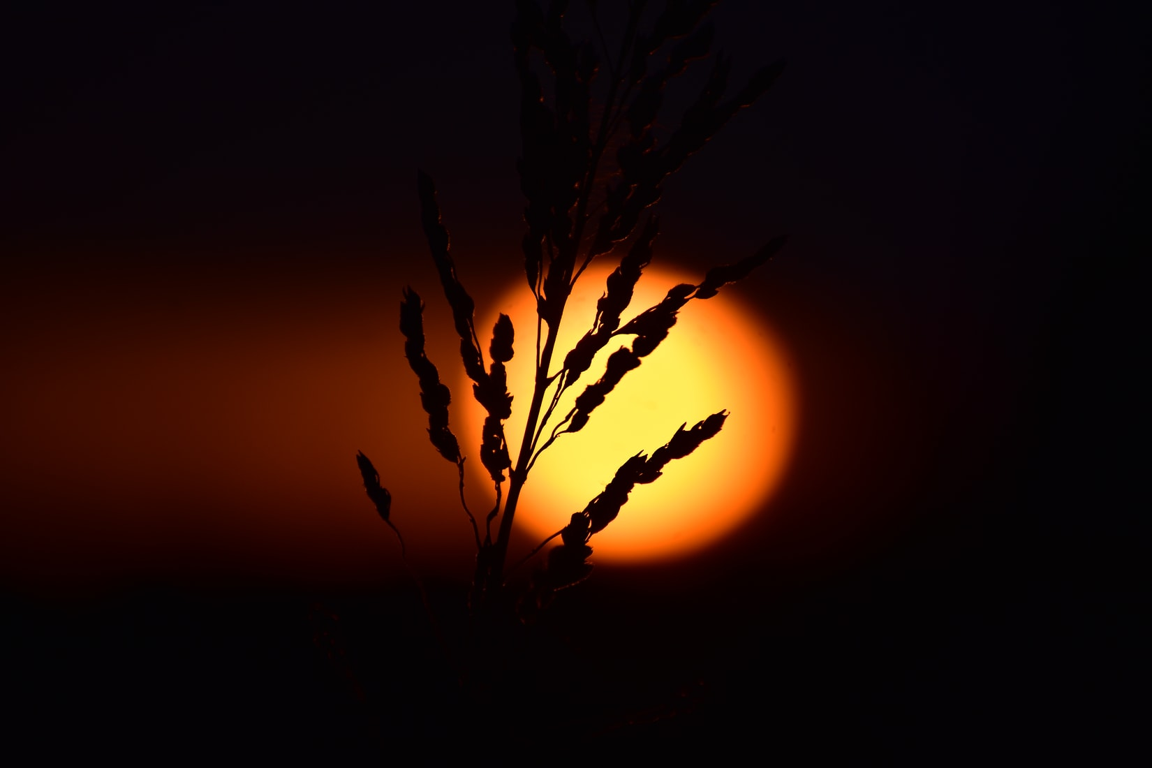An unusually orange sun glows darkly beyond the shadowy silhouette of a plant.