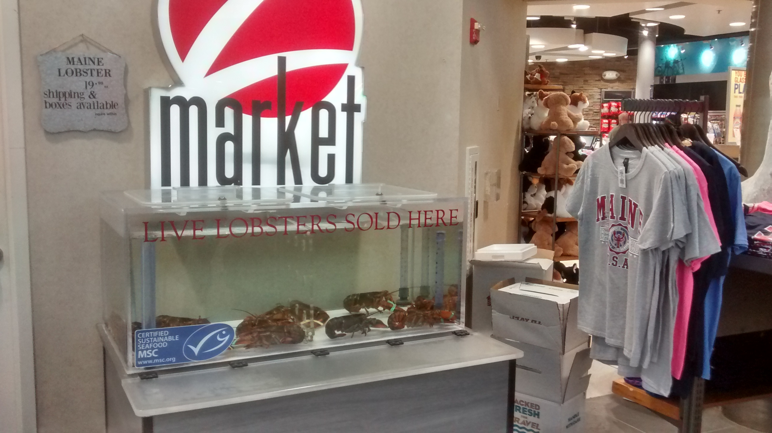 Lobsters for sale in a tank of water displayed alongside other Maine trinkets and souvenirs such as sweatshirts and stuffed animals.